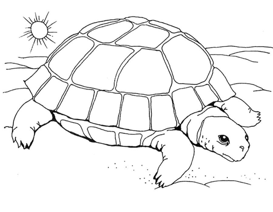 schildkröte zum ausmalen kostenlos  kinder ausmalbilder