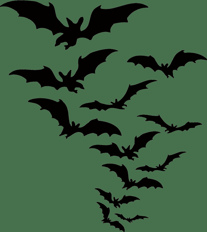 Bat PNG. Download free PNG images | WONDER DAY