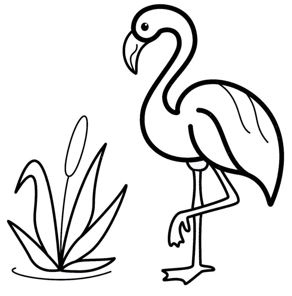 Ausmalbilder Flamingo - Kostenlos Zum Ausdrucken