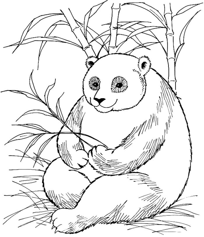Panda Coloring Pages Printable Coloring Pages For Kids