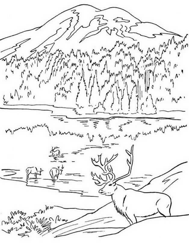 Disegni Paesaggi Di Natale.Disegni Di Natura Da Colorare Paesaggio Montagne Mare