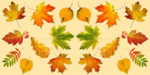Desenhos de Folhas para colorir
