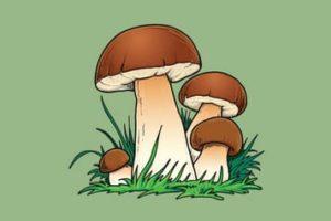 Ausmalbilder Pilze